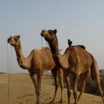 Jaisalmer_J3-011